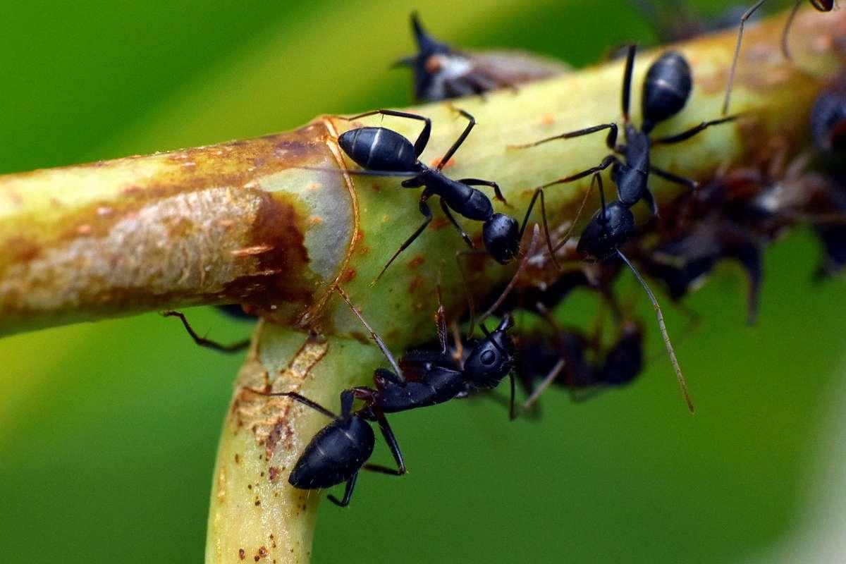 Quando mangi qualche insetto, cosa dovresti fare prima?