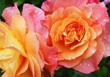 Prova ad indovinare i nomi di questi 10 fiori all'interno del nostro quiz. Sai riconoscere che fiore è?