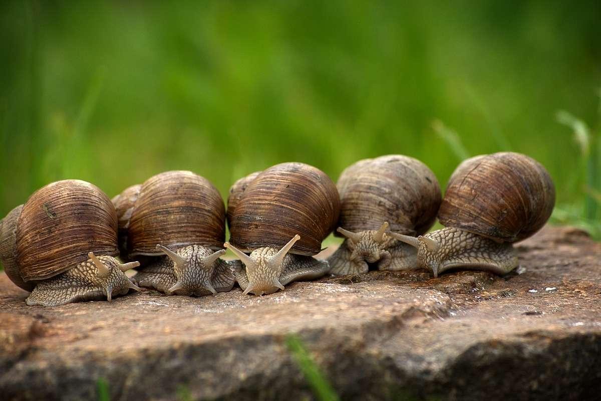 Cosa possono fare gli animali ermafroditi?