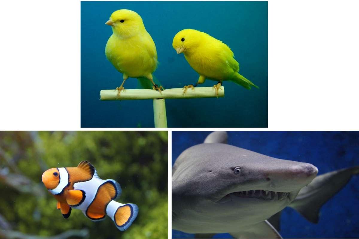 Quale di questi animali è famoso per cambiare sesso durante la loro vita?