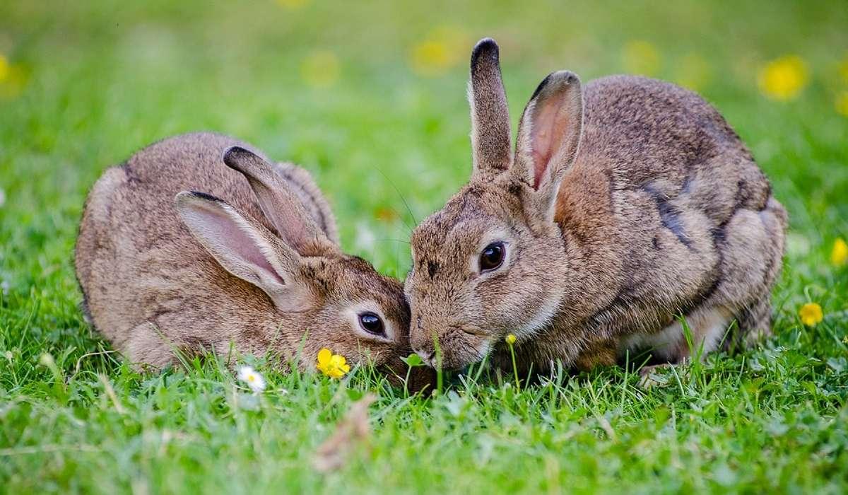 In un allevamento ci sono 4 dozzine di conigli. Quanti conigli ci sono?