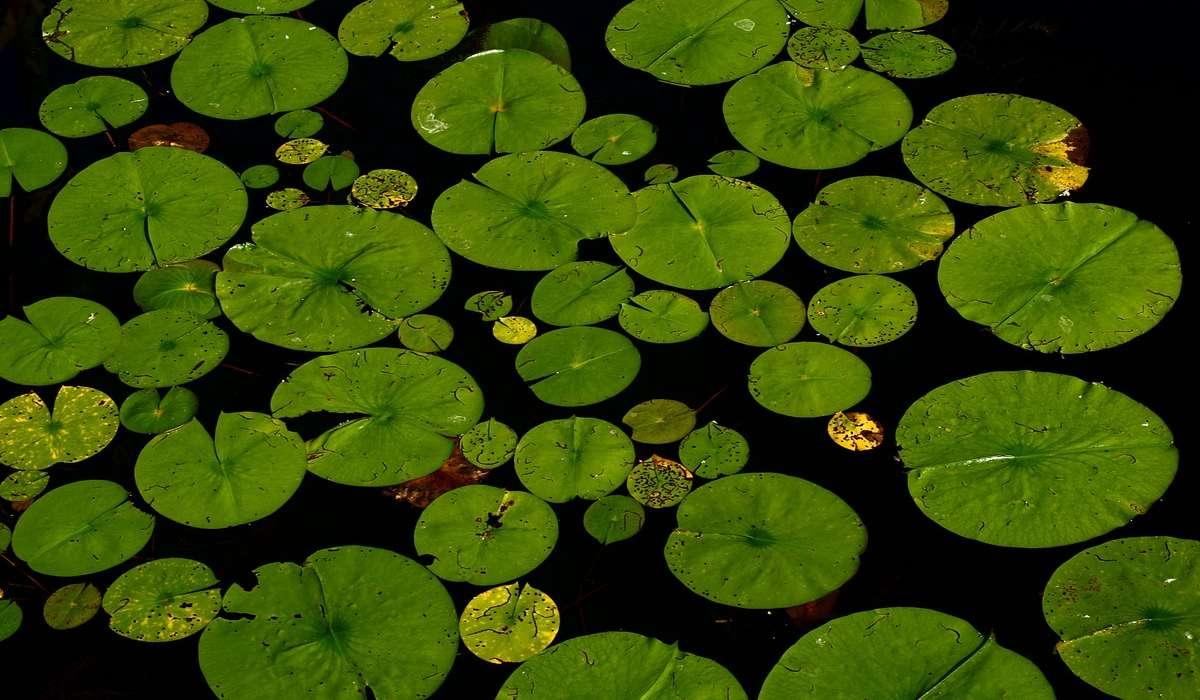 In un lago ci sono delle ninfee che raddoppiano il loro numero al passare di ogni minuto. Sapendo che dopo 1 ora il lago ne sarà pieno. Dopo quanto tempo il lago ne è pieno a metà?