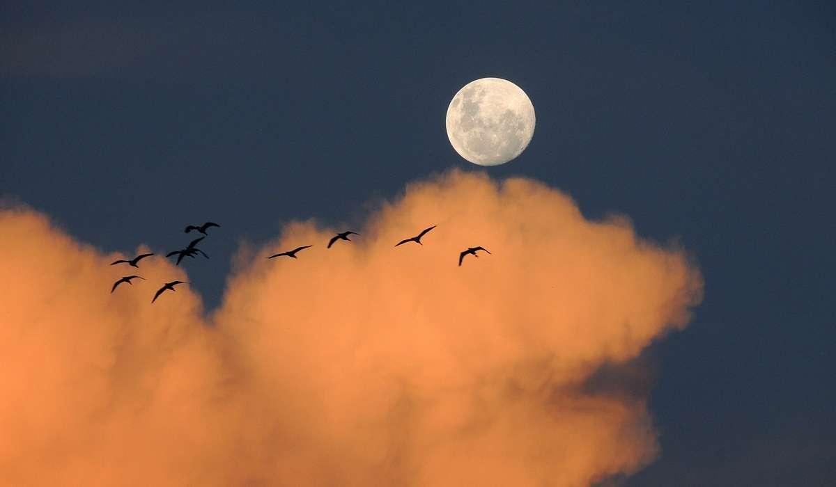 In quanto tempo la Luna ruota su sé stessa?