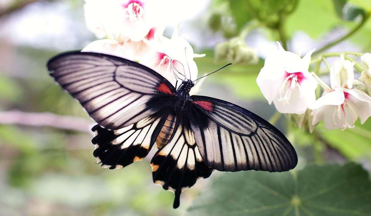 Da cosa derivano i colori che hanno sulle ali?