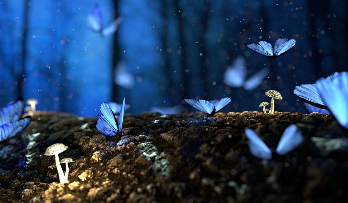 Alcune specie muoiono dopo poche ore, altre sfiorano l'anno di vita, ma mediamente quanto vive una farfalla adulta?