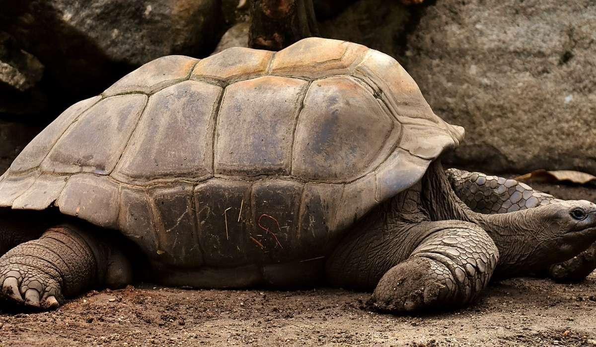 Che età ha raggiunto la tartaruga, ancora vivente, più vecchia del mondo?