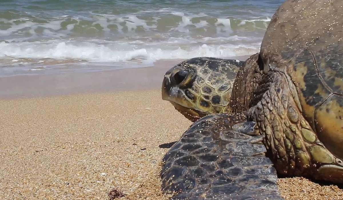 Il guscio di una tartaruga: