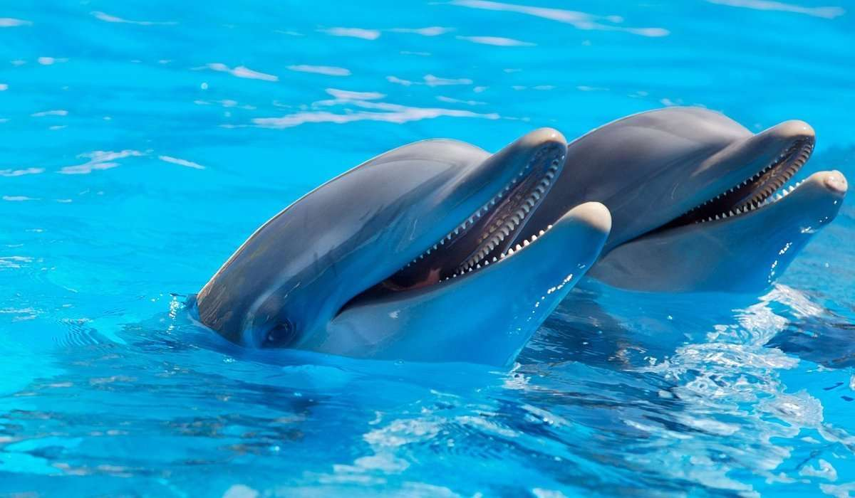 Quanti denti può avere al massimo un delfino?