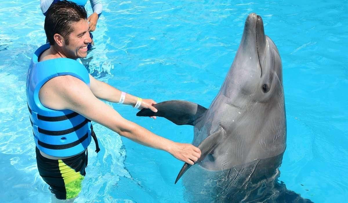 I delfini appartengono all'ordine dei cetacei.