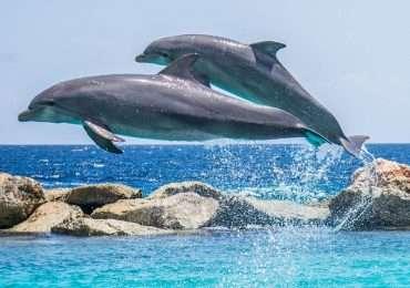 Domande e test per metterti alla prova sul mondo marino. Quanto conosci i delfini?