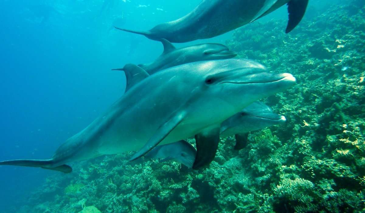 I delfini si nutrono prevalentemente di: