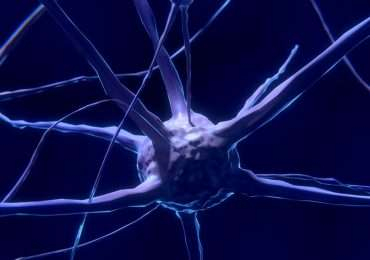 I neuroni specchio sono molto più che dei seplici neuroni, ma influscono anche sugli aspetti empatici.