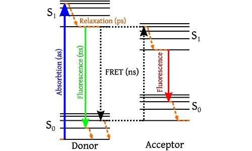 La fluorescenza si basa sul passaggio di elettroni tra livelli energetici, descritti nel diagramma di Jablonski