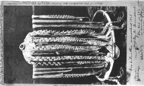 La prima foto di un calamaro gigante