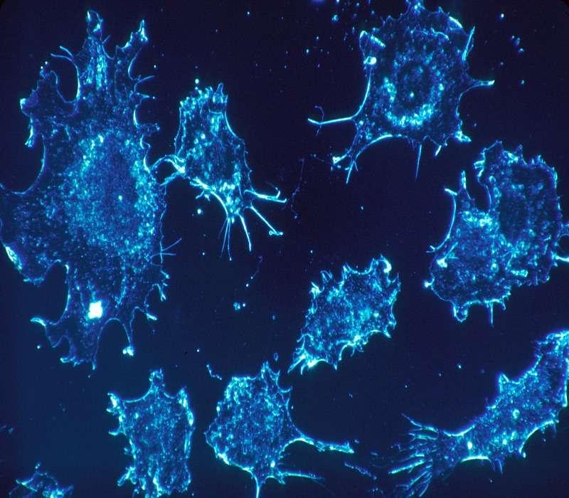 L'effetto warburg fu scoperto da otto heirisch warburg e descrive una peculiarità delle cellule cancerose. Queste hanno tassi di glicolisi molto maggiori.