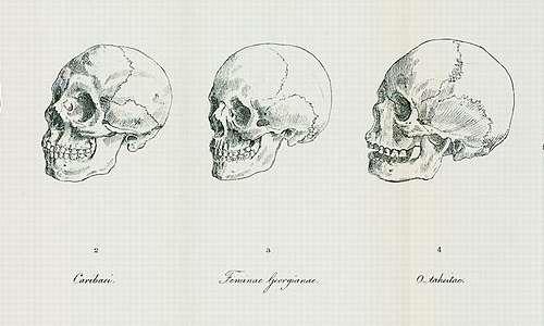 La classificazione delle razze umane di Blumenbatch secondo le differenze craniali.