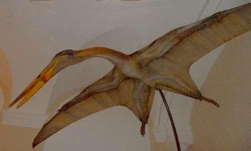 Una ricostruzione di uno pterosauro, costruita sulla base degli studi sui fossili, è utile a comprendere la morfologia di questi antichi animali.