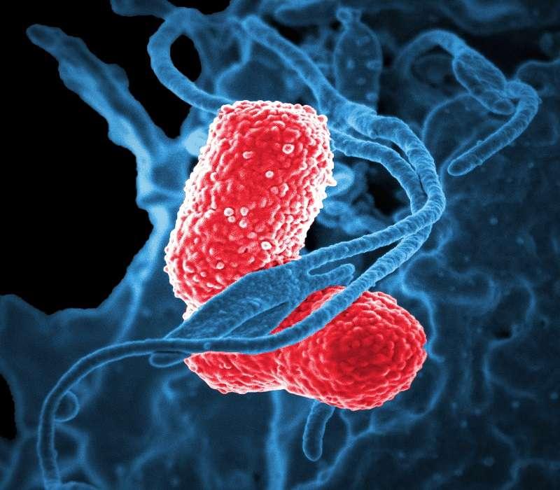 I batteri sono caratterizzati da una cellula procariota