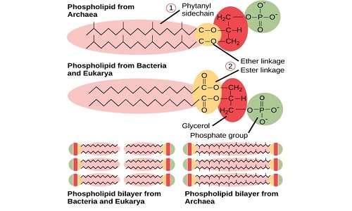 Le membrane della cellula procariota