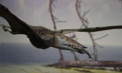 La ricostruzione computerizzata mostra uno pterosauro marino in volo. Questi preistorici animali si cibavano di pesce probabilmente.