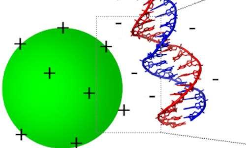 Interazione tra DNA e polimero cationico per terapia genica non virale
