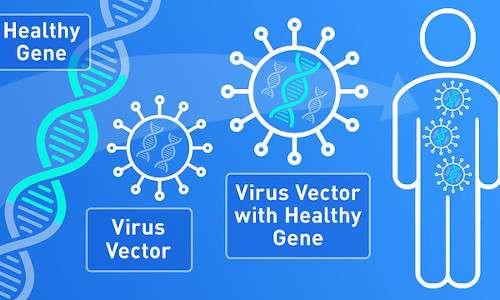 Schema della terapia genica in vivo