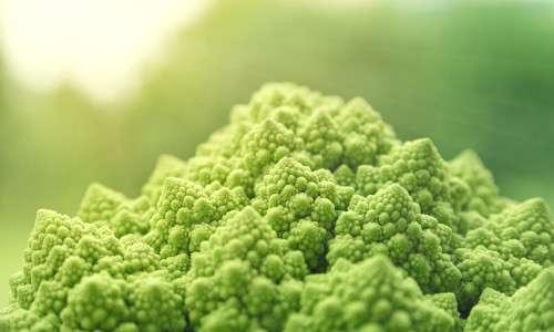 Per prevenire il cancro bisogna avere un'alimentazione ricca di fibre e vitamine, contenute nelle verdure come il broccolo