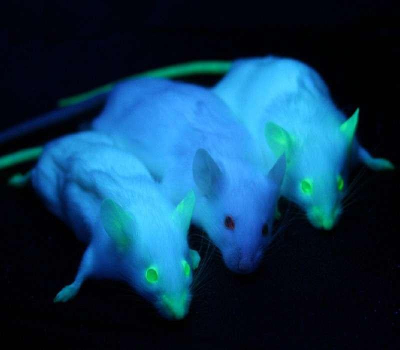La GFP è una proteina fluorescente verde usata in moltissimi campi della ricerca