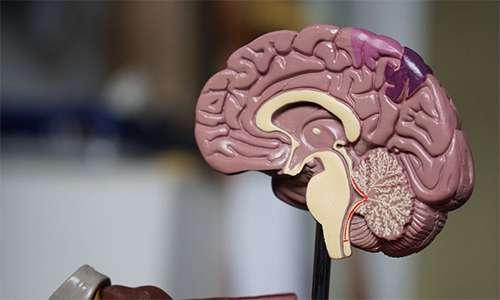 La psicoterapia cura la mente