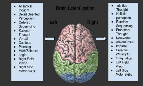 lateralizzazione delle funzioni cerebrali, scoperte anche grazie ai pazienti split-brain