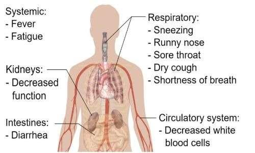 Il coronavirus SARS-Cov-2 causa la patologia COVID-19. Il virus colpisce principalmente i polmoni ma anche i reni, l'intestino e il sistema circolatorio.