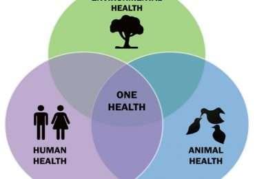 I recenti cambiamenti climatici possono aver facilitato la nascita di zoonosi, malattie infettive che si trasmettono dagli animali all'uomo.