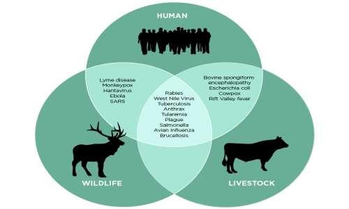Virus e agenti patogeni possono mutare e passare da un animale all'uomo, dando vita ad una zoonosi.