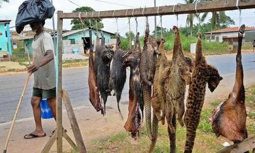 Le zoonosi possono essere facilitate dal commercio illegale di animali selvatici, non controllato da rigide regole igienico-sanitarie.