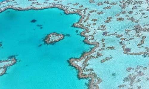 Lo sbiancamento dei coralli interessa le barriere coralline di tutto il mondo