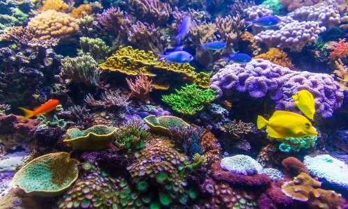 Lo sbiancamento dei coralli equivale alla morte dei coralli.