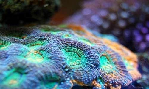 Lo sbiancamento dei coralli è la perdita di colore dei polipi.