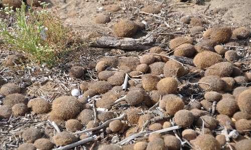 Le praterie di Posidonia oceanica sono ricche di biodiversità e sono elementi importanti negli ecosistemi marini.