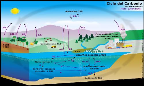 Data l'importanza dei componenti della neve marina e degli organismi che possono abitare i suoi aggregati per il ciclo del carbonio, lo studio della stessa sembra essere molto utile a settori scientifici molto diversi, dalla geoingegneria alla microbiologia.