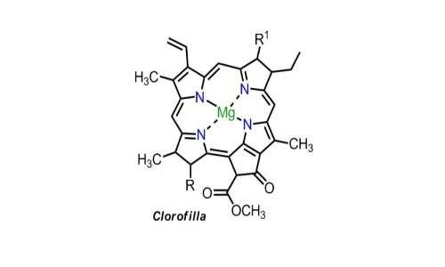 La fotosintesi clorofilliana basa le sue reazioni alla luce sulla cattura dell'energia solare da parte di pigmenti, primi fra tutti la clorofilla.
