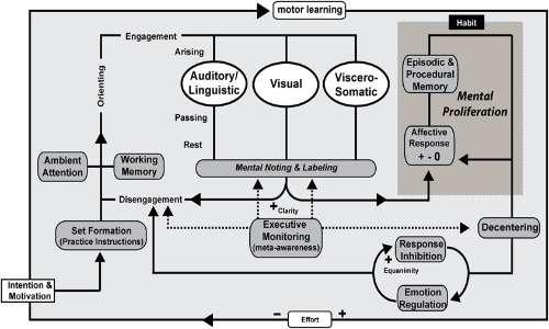 ASMR cos'è? La mindfulness e l'ASMR agiscono entrambe sul Default Mode Network.