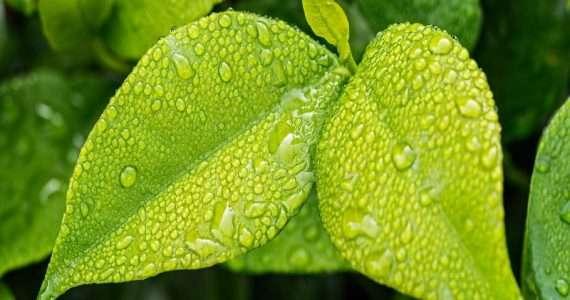La fotosintesi clorofilliana costituisce quel processo grazie al quale le piante riescono a produrre zuccheri a partire da anidride carbonica, acqua ed energia solare.