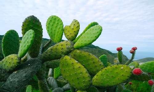 La fotosintesi clorofilliana permette di produrre glucosio a partire da acqua, anidride carbonica ed energia solare.