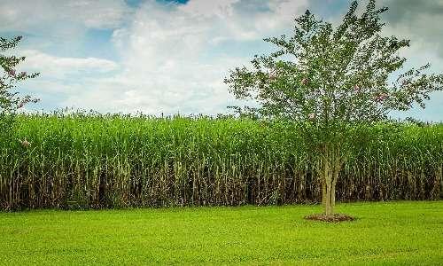 In base ai processi che regolano le reazioni del carbonio, e quindi al tipo di fotosintesi clorofilliana che le caratterizza, le piante sono distinte in piante C3, C4 e CAM.