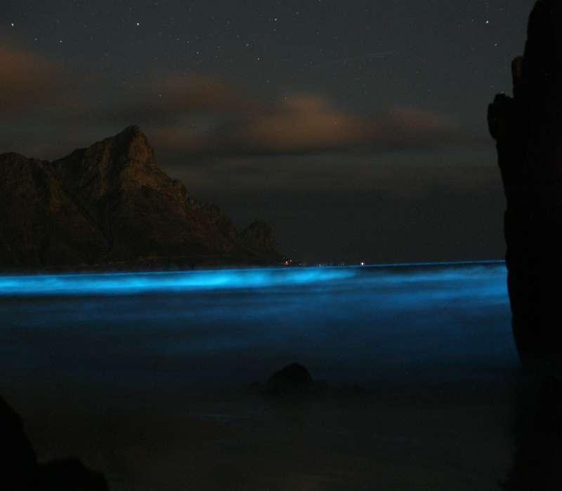 Molti tipi di plancton possiedono una bioluminescenza che crea suggestivi paesaggi marini.