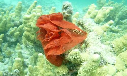 I nudibranchi sono molluschi dalle