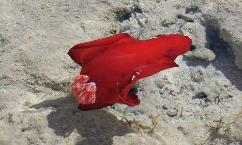I nudibranchi sono molluschi marini dotati di vivaci colorazioni e assenza di conchiglia.
