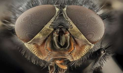 Spesso gli occhi degli artropodi sono occhi composti.