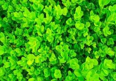 La nutrizione minerale delle piante