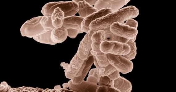 La disbiosi è uno squilibrio microbico caratteristico del morbo di Crohn.